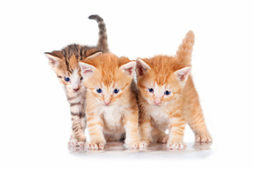 Three sweet little kittens