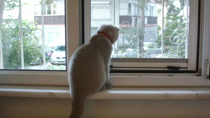 Cat In The Window (2 clips)