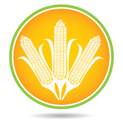 Corn, maize illustration