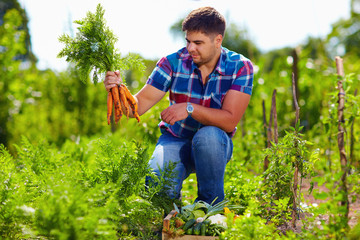 farmer harvesting carrots in vegetable garden
