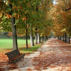 Autumn park in Parma, Italy