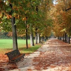 Autumn park in Parma, Italy