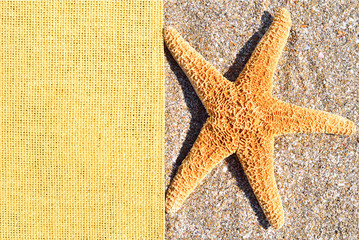 Starfish on the sand and sackings