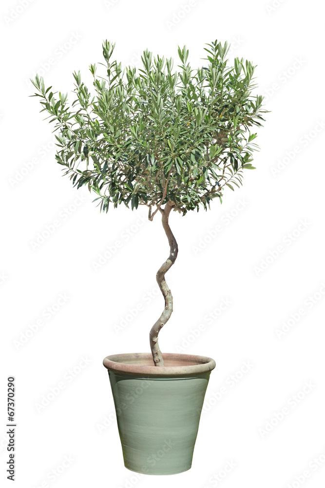 Muurstickers olivier en pot foto4art - Arrosage olivier en pot ...