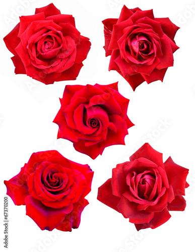 canvas print picture roses