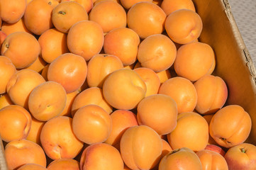 Fresh apricots at the market