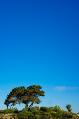 Lone olive tree on a hilltop