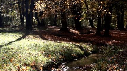 Herbst 8