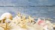 Muscheln und Seesterne vor blauem Holz :)