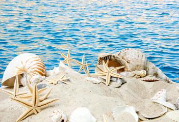 Sand, Meer, Muscheln, Nautilus und Seesterne :)