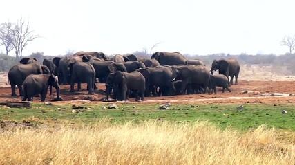 african elephants herd in Namibia