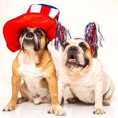 Two bulldogs posed for the 4th of July Holiday