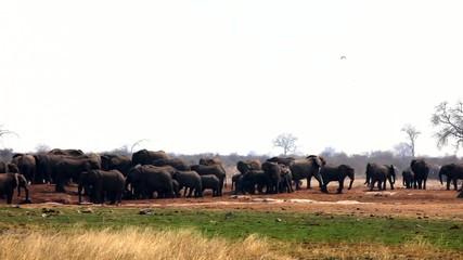 african elephants herd in Namibia