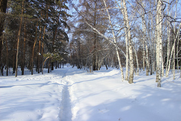 Winter landscape. Mixed forest