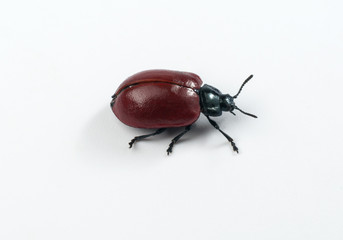 Beetle isolated on a white. Clipping path