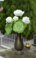 White lotus flower in a vase