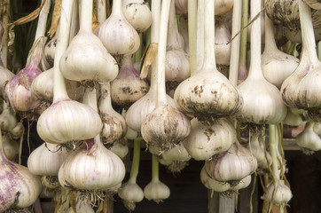 Garlic hanging to dry.