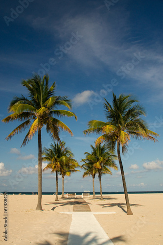 canvas print picture Beach, Weg, Palmen, Florida, Sandstrand, Fort Lauderdale,