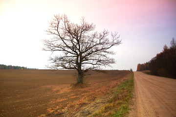 Bare tree in a field