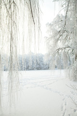 cold winter forest