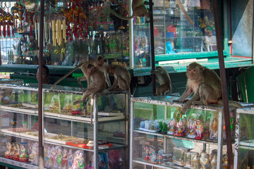Stall full of monkeys in Lopburi