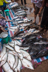 Fish for sale on a market in Pakse