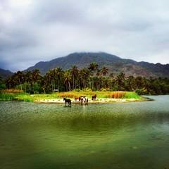 Caballos en lago en Tayrona Colombia
