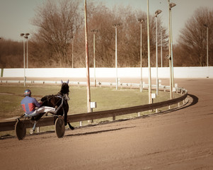Harness Racing .horse