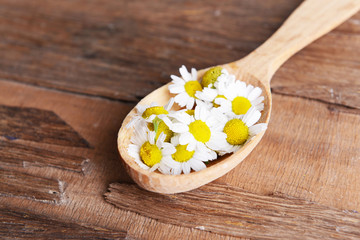 Camomile in wooden spoon on table close-up