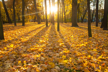 Beautiful morning in autumn forest