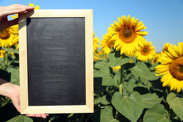 Blackboard blank in hands in sunflower field