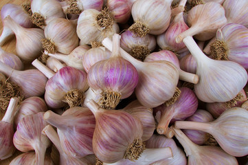 Pile of Garlic