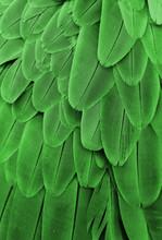 Groene veren