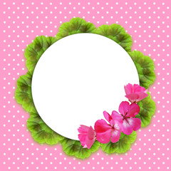 Pink background with geranium flowers