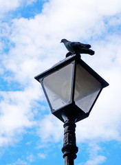 Pigeon sitting on the lantern against the blue sky with clouds