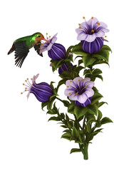 Kolibri auf Nahrungssuche mit Blüte