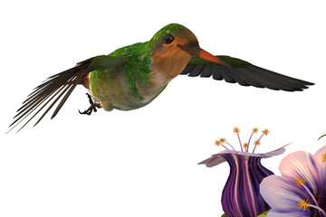 "Hummingbird ""Frilled Coquette Male"""