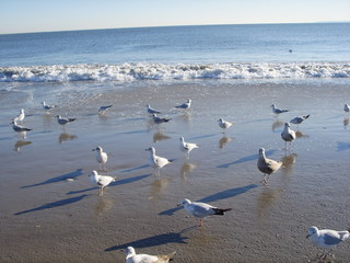 Seagulls on Brighton Beach, New York.