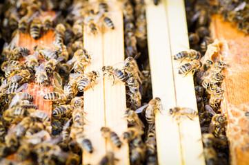 Bienenvolk auf verlassen den Bienenstock