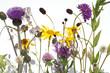 Leinwanddruck Bild - Alpenblumen, Blumenwiese,