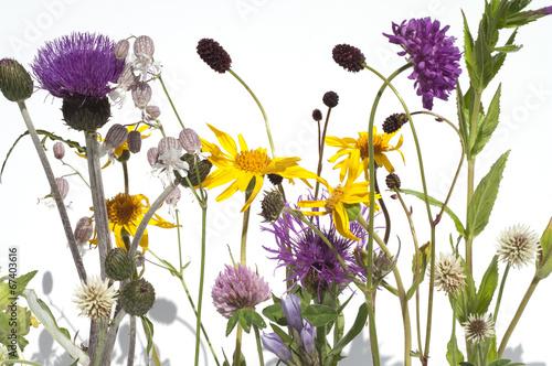 Leinwanddruck Bild Alpenblumen, Blumenwiese,