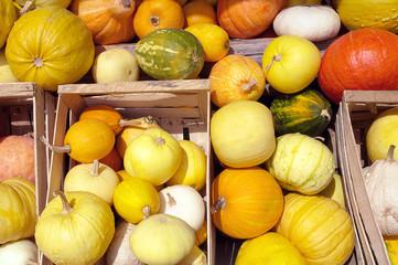 Kürbisse, leuchtende Herbstfarben, Gemüse, Bauernmarkt