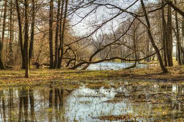 HDR fotografiya.vesennyaya rebirth of nature