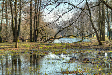spring landscape. HDR photo
