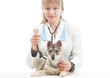 vet with stethoscope and puppy huskies
