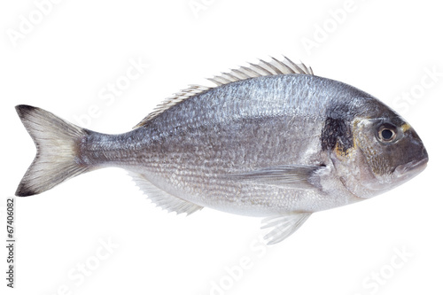 Deurstickers Vis Dorado fish on white background