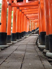 Torii path on Mt. Inari.