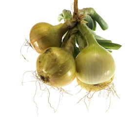 bunch of fresh onions