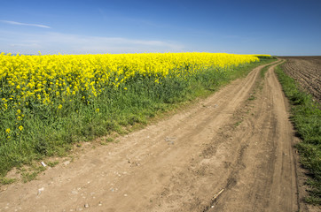 Country road and rape field