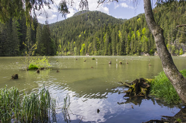 Beautiful lake in forest